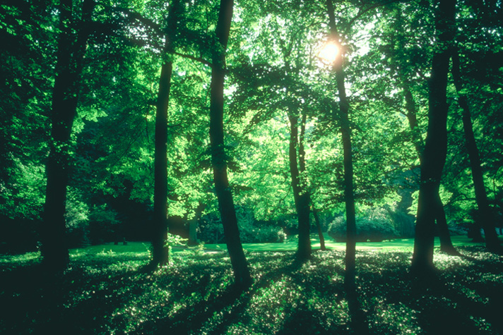 green forest with sun