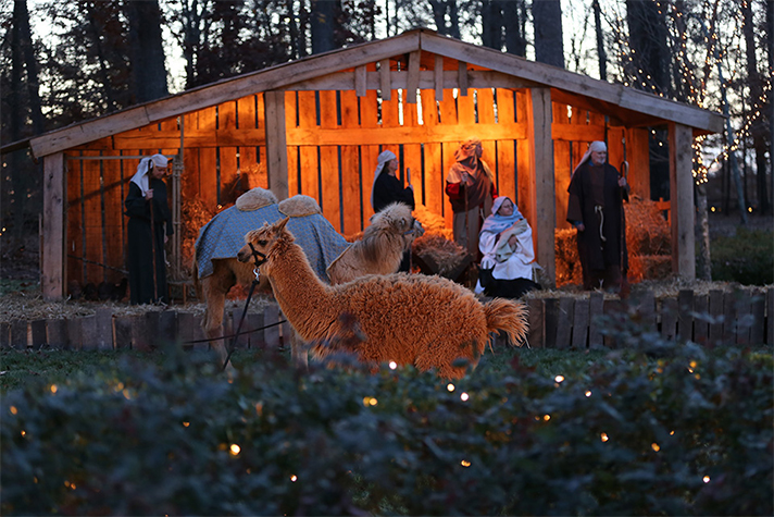 Live Nativity scene; Volunteers as Mary, Joseph, shepherds; also a camel, llama