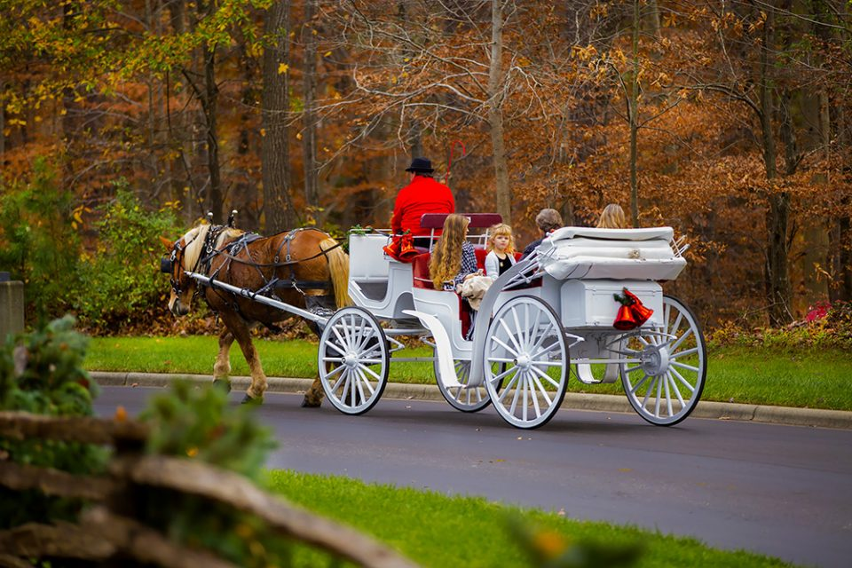 Children and parents ride in a horse-drawn carriage