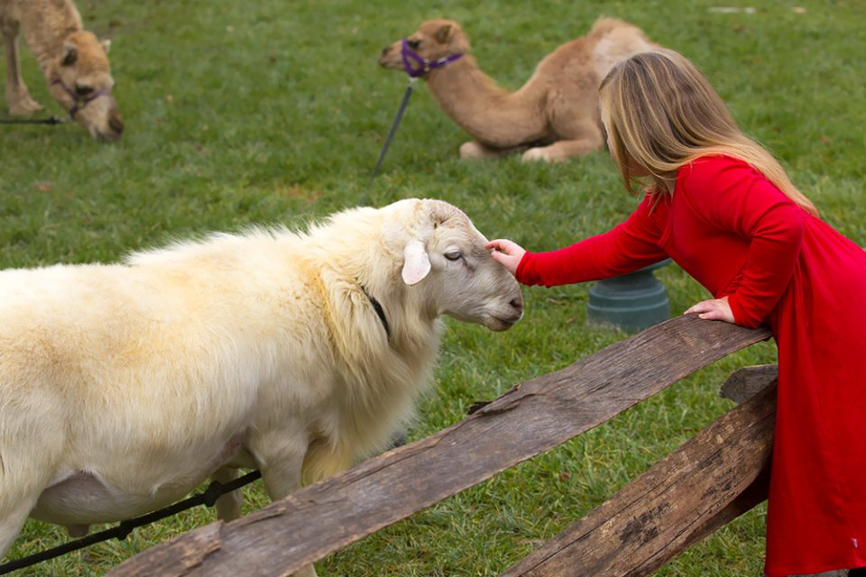 Girl petting a sheep